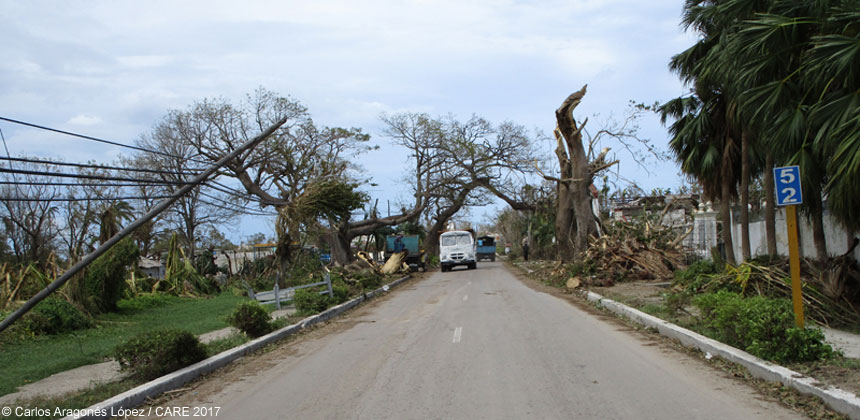 Storm damaged trees beside a road