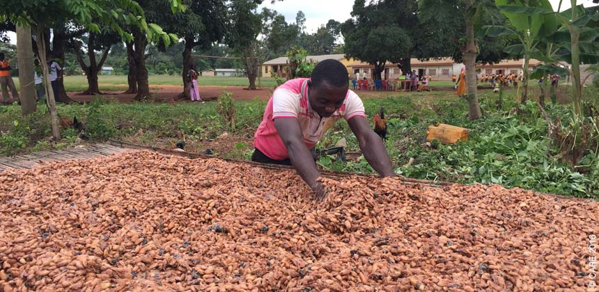 Man drying cocoa seeds