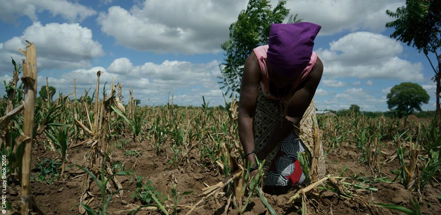 Rose Katandika in her maize field