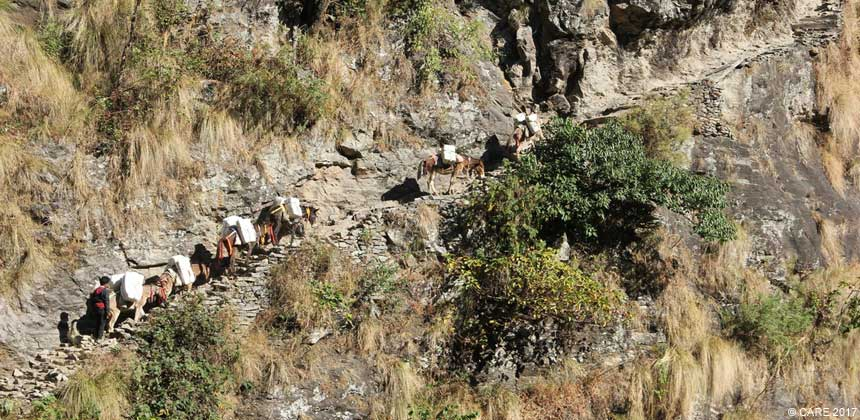 Mules on a steep hillside path in Nepal