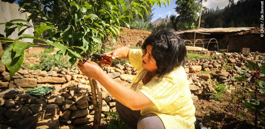 A woman in Peru tending a plant on her farm