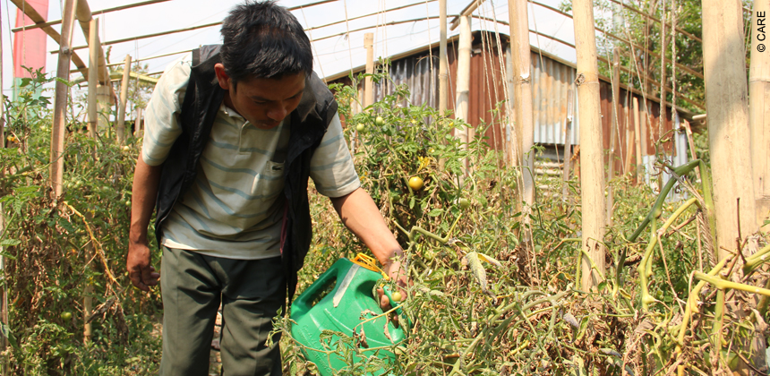 Som Bahadur Tamang waters the tomatoes in his tunnel farm