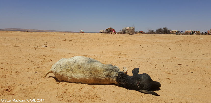 Dead sheep in Somaliland