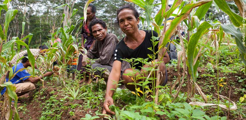 Farmers in a field of crops in Timor-Leste