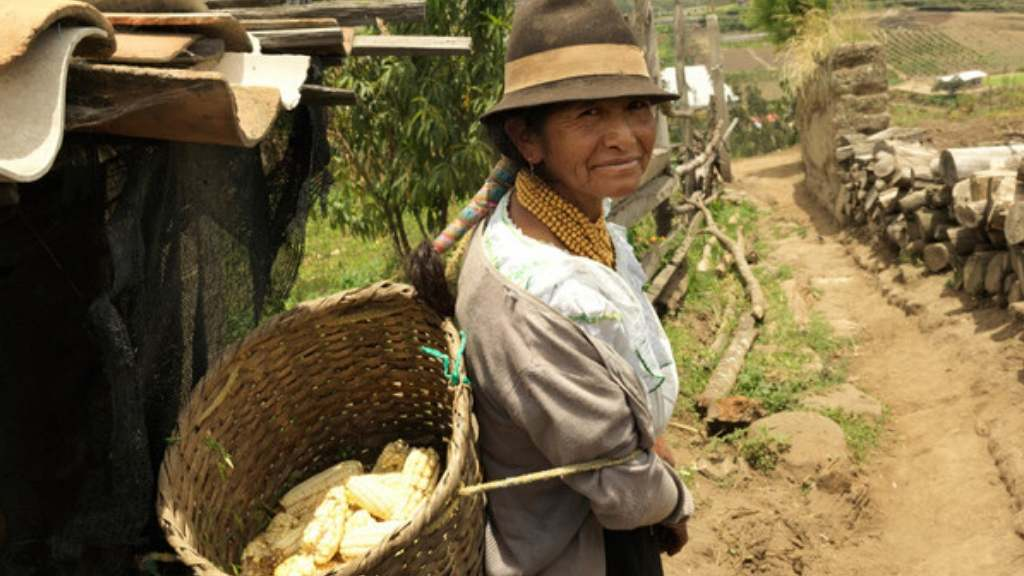 A female entrepreneur takes corn she has grown to market, in the foothills of the Andes, Ecuador.