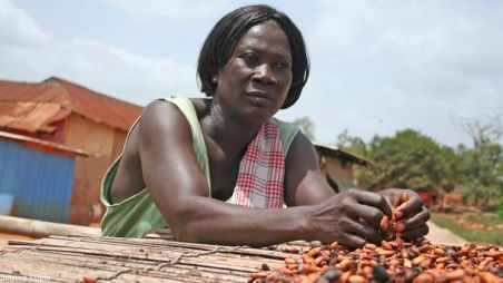 A cocoa farmer drying cocoa pods on a wooden platform