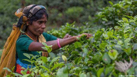 Woman tea picker at plantation in Sri Lanka