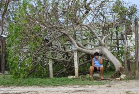 A woman sits beside a blown-down tree