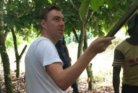 Steve cutting cocoa pods from a tree