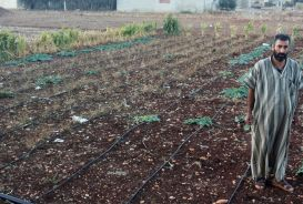 Hamdou Hussein Nabhan on his vegetable plot in Homs, Syria