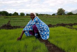 Anna Latasaruaki, a farmer in Tanzania, in her field