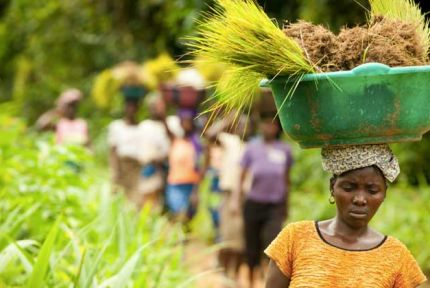 CARE is giving affected communities seeds and tools to start planting for the new season